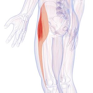 Faszien Osteopathie Oberschenkel