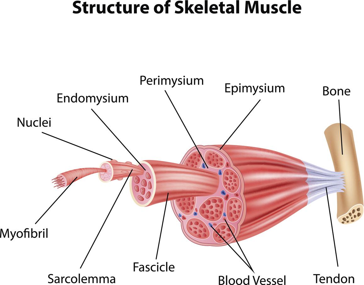Osteopathie Schwinn Lauer Cartoon Illustration Of Structure Skeletal